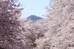 201104fukui10