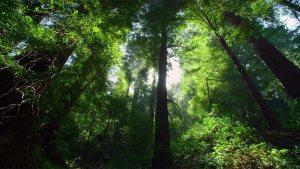 forest-gurps