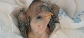 Why do you think this baby Yucatan parrot is smiling?