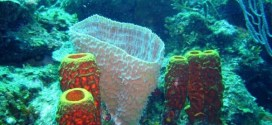 Tips and stories on diving and scuba diving safety from Belize and Mexico