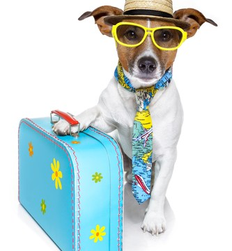 Top Gear needed for a Fun & Safe Road Trip with Your Dog