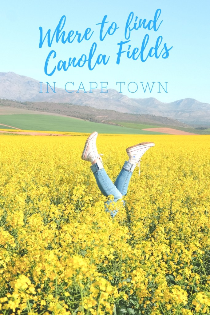 Where to find canola fields in Cape Town