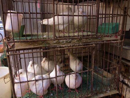 鶏は生きたまま売られている