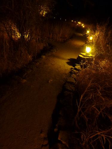 夜のプラネットバオバブ (11)