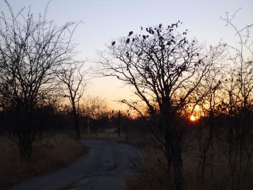 朝のプラネットバオバブ  (1)