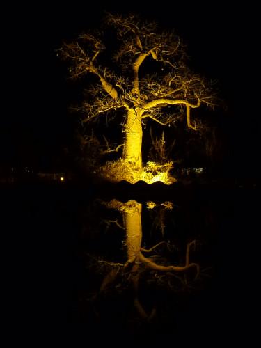 夜のプラネットバオバブ (8)