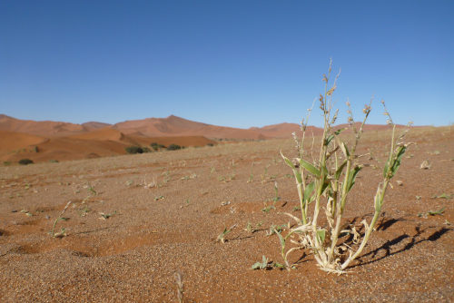 ナミビアナミブ砂漠2 (23)