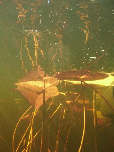 ボツワナモコロトリップ水中 (5)