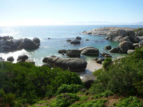 南アフリカのケープペンギン (8)