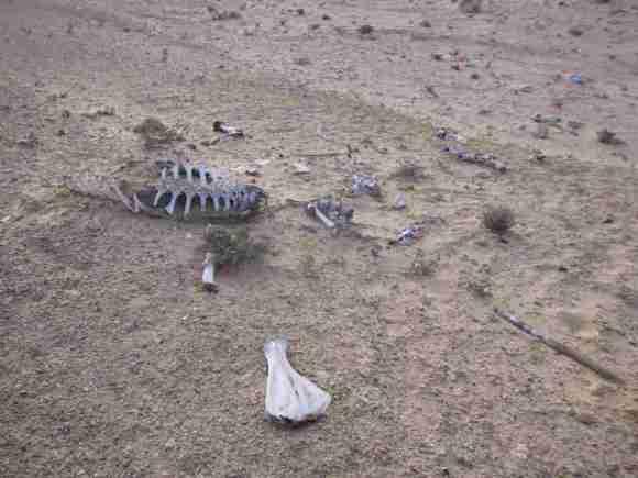 サハラ砂漠自転車旅 (1)