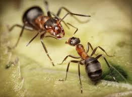 Humorous story of The Great Ant War
