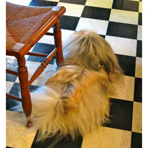 Medium Crop Of Dog That Looks Like A Mop