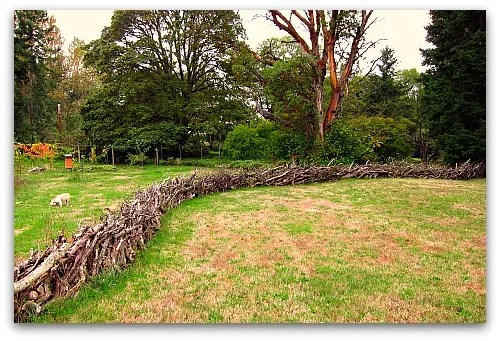 stick fence and boz