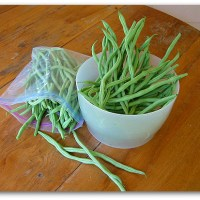 Fortex: Best Mess of Green Beans Growing