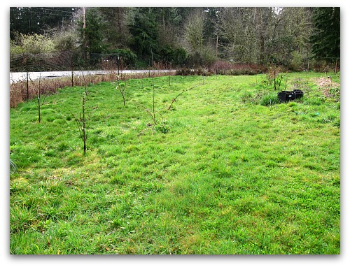 how to remove blackberries - the area a year later