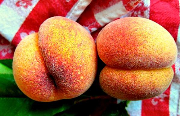 Avalon Pride Peach