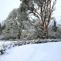 Christmas Lights, Madrona Trees, and a Cordless Phone