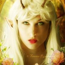 Elf book cover