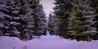 winter-rennsteig-thueringer-wald-ski-langlauf-tdaktiv-4