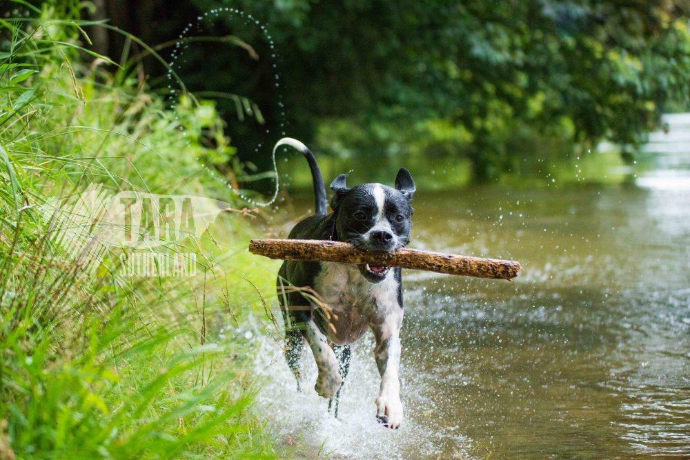 Nixie Lix - Pet Photography at The Narrows