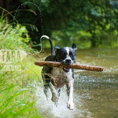 Nixie Lix - Pet Photography at The Narrows