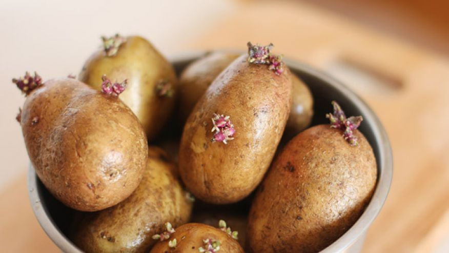أطعمة قاتلة المطبخ يؤدي استخدامها 4-potatoes-shutter.j