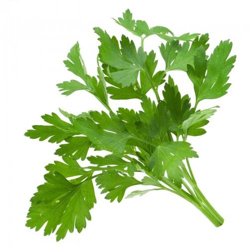 فوائد الكزبرة الخضراء السحرية العشرة Coriander-Leaves-e14