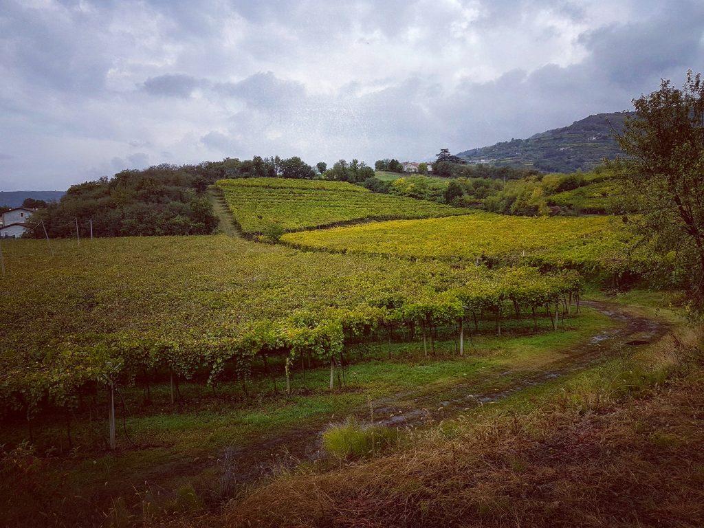 winica Corte Moschina blog o winach