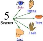 Friend Makin' Mondays: Five Senses