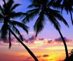 rp_palm-trees.jpg