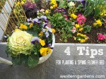 4 Tips for Planting a Spring Flower Bed!