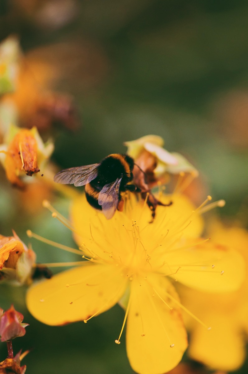 Von Blümchen und Bienchen