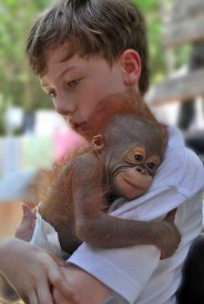 tears in the jungle - Daniel with orangutan baby