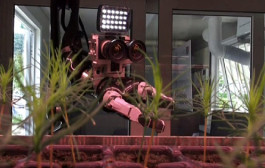 Solid Saplings from The Robot-Nursery