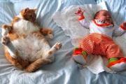 Copy cat blogger
