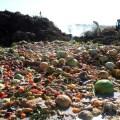 Νέο app κατά της σπατάλης τροφίμων