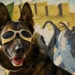 DARPA dog