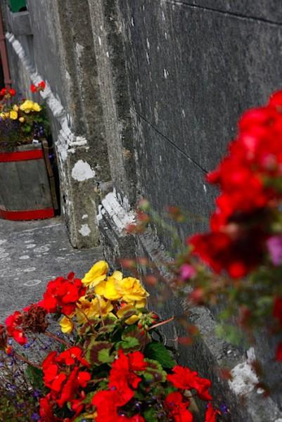 Flowers in Ballyvaughn