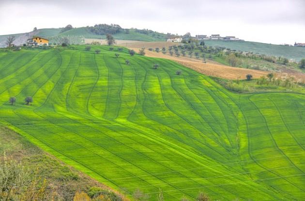Textured grassy hillside