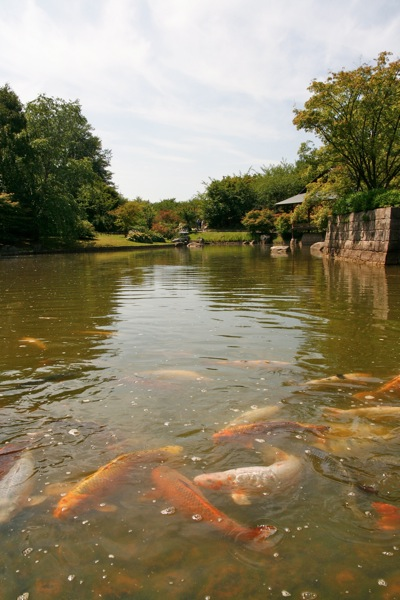 Hasselt's Japanese garden
