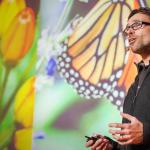 Jaap de Roode: How butterflies self-medicate