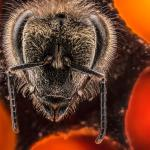Anand Varma: A thrilling look at the first 21 days of a bee's life