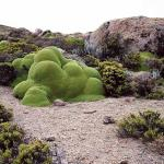 Rachel Sussman: The world's oldest living things