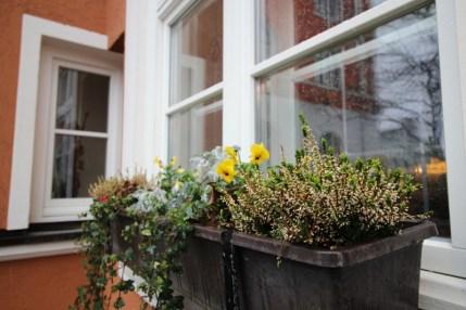Die Pflanzen vor dem Restaurant des Erdinger Weißbieres