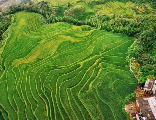 Sapa Tours of the Rice Terraces in Vietnam
