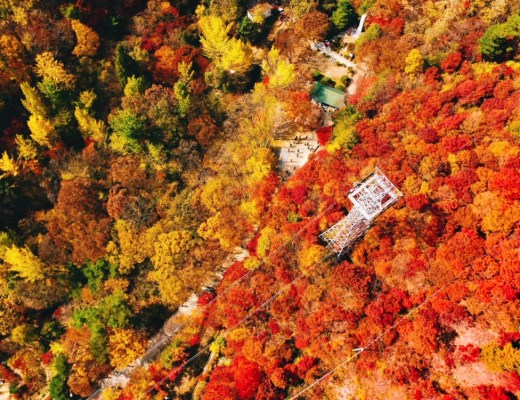 Daedunsan Mountain, South Korea Autumn Leaves