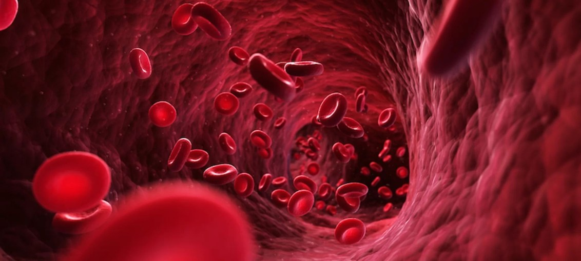 Human Blood, Woman, Erythrocytes, Bone Marrow, White Cells, Pint, Plasma, Bacteria, viruses, Red Blood Cells, Platelets, Blood Donation, Human, Sugar, Alcohol, Calcium, Cholesterol, Vitamin B-12,