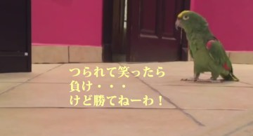 Bird Laughs Like Super Villain   YouTube