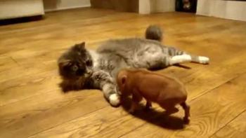 猫の素敵なお友だち。とってもかわいい子豚ちゃん