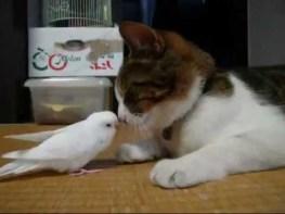 猫とインコ 二人は親友。じゃれあう姿がとってもカワイイのです。